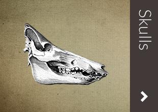 skullsOverBLK